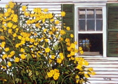 A large yellow flower plant lightens up the yard in front of the window of an old house in New England.